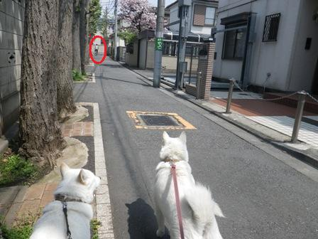2012.4.25 通りすぎた犬達を見る母娘