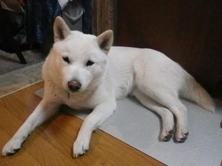 2012.4.27 今日の昼寝・花鈴