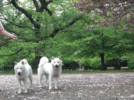 2012.4.29 井の頭公園5