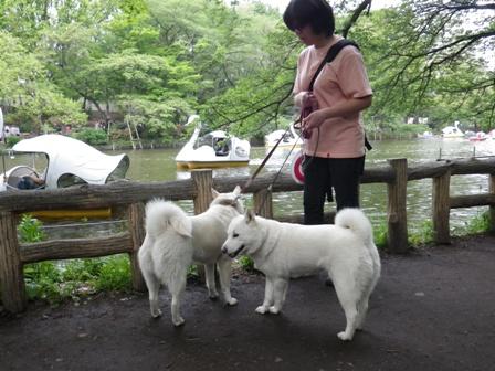 2012.4.29 井の頭公園3