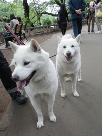 2012.4.29 井の頭公園1