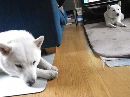 2012.5.3 マッタリな母娘
