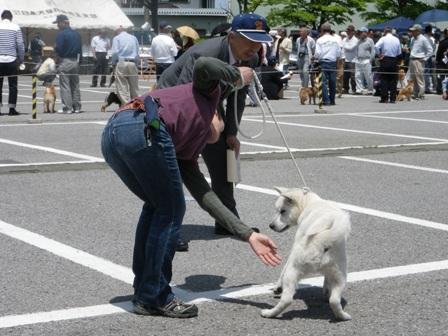 2012.5.13 ハツ君・個体審査中