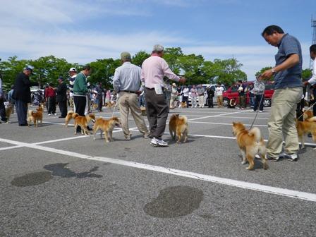 2012.5.13 審査の様子・柴犬
