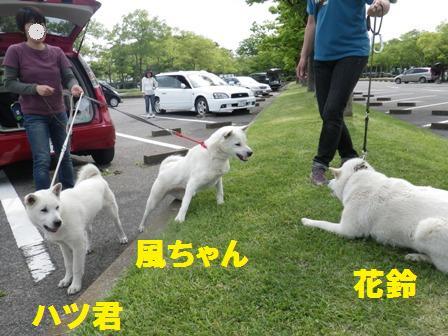 2012.5.13 風&ハツvs花鈴