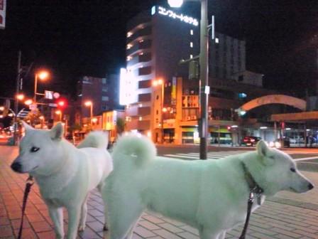 2012.5.19 夜の散歩2