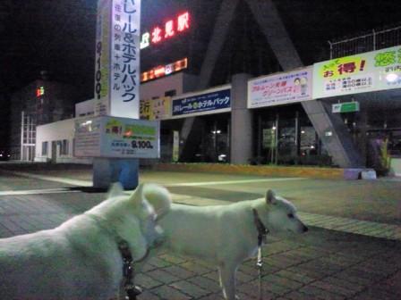 2012.5.19 夜の散歩1