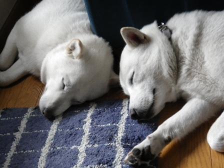 2012.5.30 仲良くおやすみ~