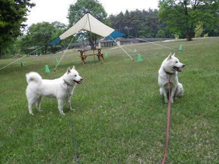 2012.6.3 アルプスあづみの公園(大町松川地区)5