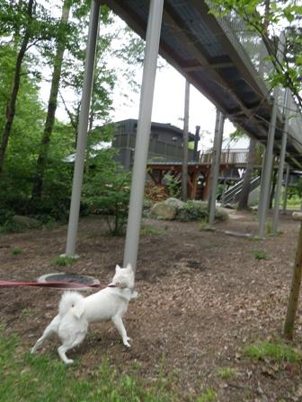 2012.6.3 アルプスあづみの公園(大町松川地区)8
