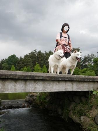 2012.6.3 アルプスあづみの公園(堀金穂高地区)1