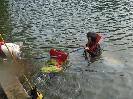 2012.6.7 PM 泳いで見る?