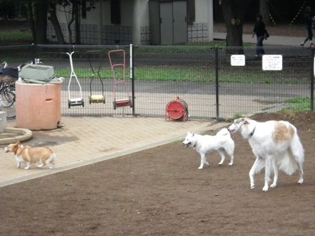 2012.6.11 芦花公園ドッグラン2