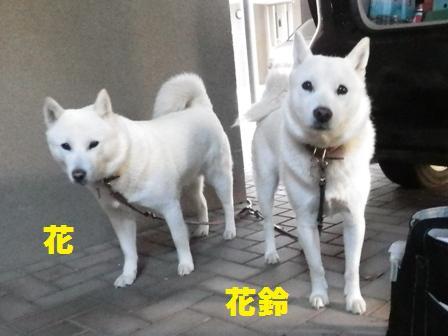 2012.6.14 どこ行くの~?
