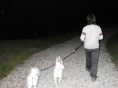2012.6.15 夜の散歩