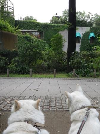 2012.6.22 三鷹の森ジブリ美術館・ラピュタ1