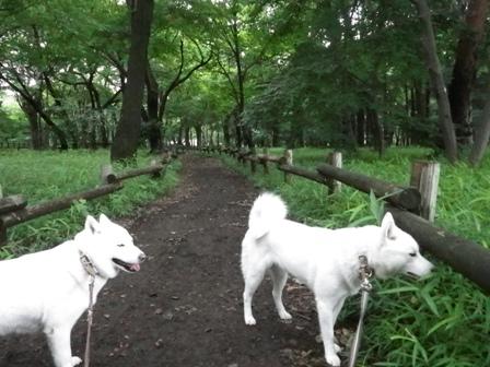 2012.6.22 三鷹の森?