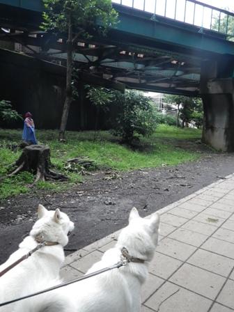 2012.6.22 井の頭線高架下&お地蔵さん