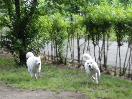 2012.6.25 ドッグラン・フリーエリア