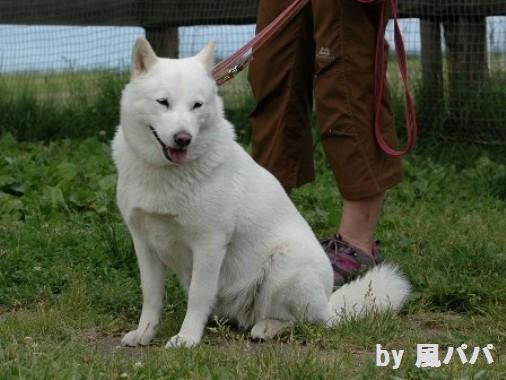 DSC_0047 2012.6.25 a花