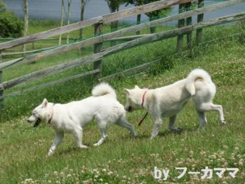 2012_0625_a風ちゃんと