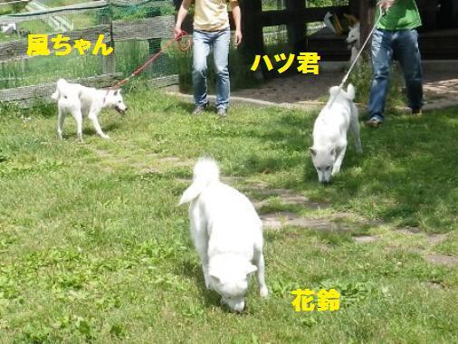 2012.6.25 a 風ちゃん&ハツ君登場~