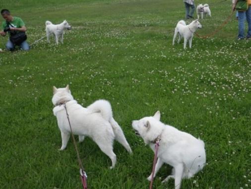2012.6.25 a 湖畔の草地で…