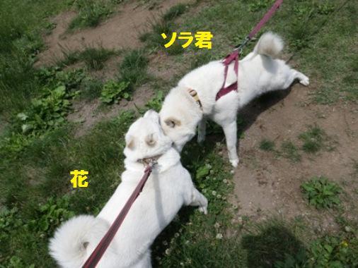 2012.6.25 a ソラ君と花