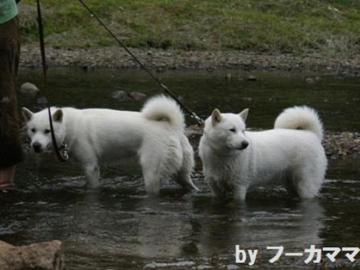 2012_0625_b水だ~