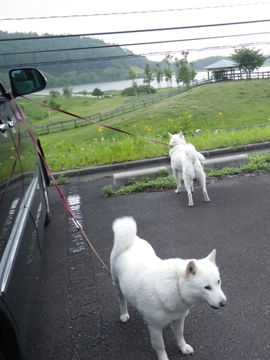 2012.6.25 d 再びドッグラン