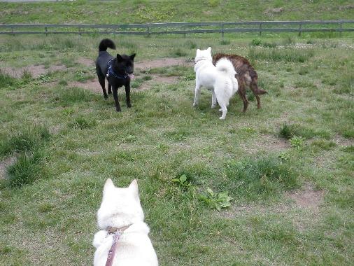 2012.6.25 d 北海道犬&甲斐犬