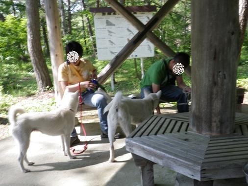 2012.6.25 d 東屋で休憩・風&ハツ