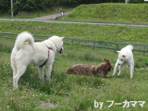2012_0625_cコテツちゃんと