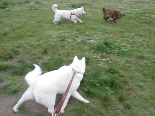 2012.6.25 d ソラ君とコテツちゃんの追いかけっこを見て…