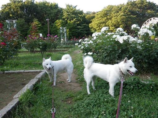 2012.6.29 代々木公園にて2