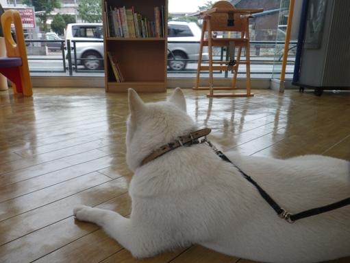 2012.7.5 TOYOTA世田谷店にて1