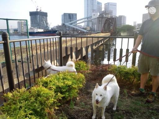 2012.7.2 晴海公園