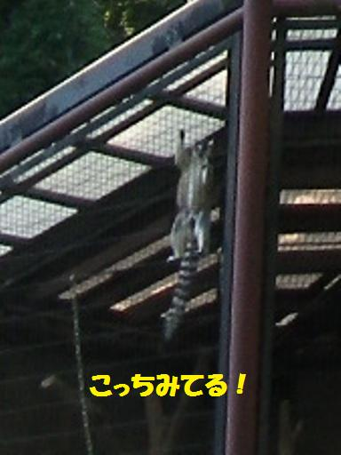 2012.7.4 上尾丸山公園5
