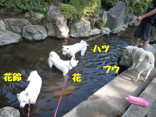 2012.7.4 上尾丸山公園7