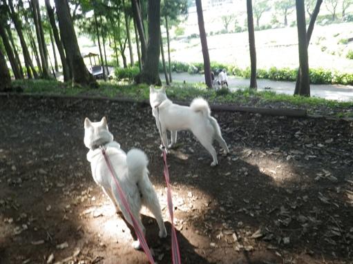 2012.7.4 上尾丸山公園10