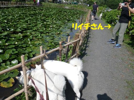 2012.7.4 上尾丸山公園9