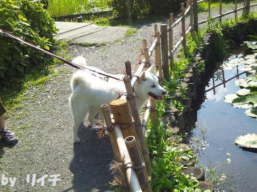 2012.7.4 上尾丸山公園byリイチ1