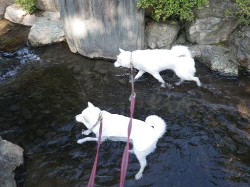 2012.7.4 上尾丸山公園2