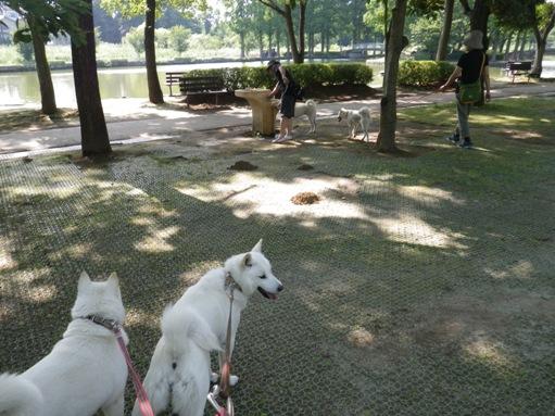 2012.7.4 上尾丸山公園1