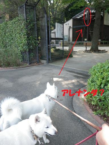 2012.7.4 上尾丸山公園4