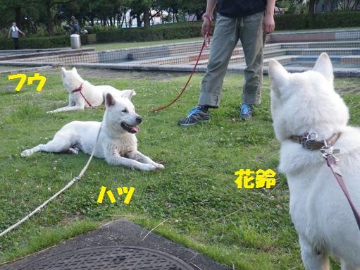 2012.7.4 三橋公園6
