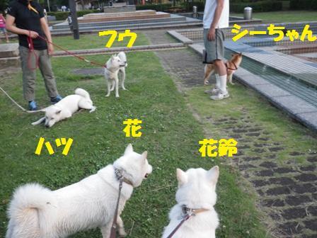 2012.7.4 三橋公園5