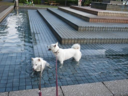 2012.7.4 三橋公園4