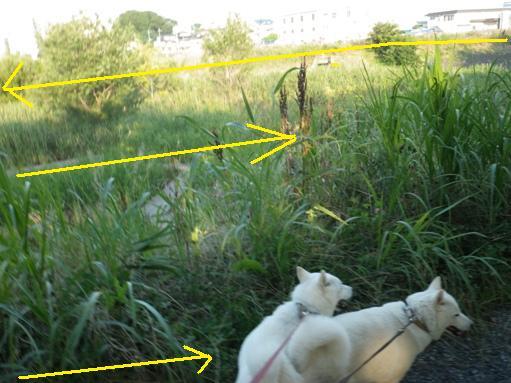 2012.7.4 三橋公園3