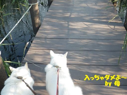 2012.7.4 三橋公園1